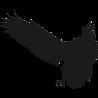 US EAGLES 4